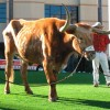 Bevo At work
