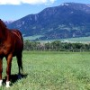 Horse in Montana